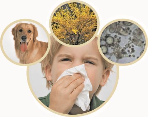 как бороться с аллергией после приема антибиотиков